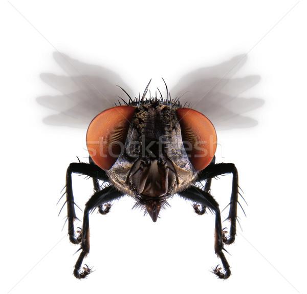 Uçmak makro detay ev doğa bacaklar Stok fotoğraf © hanusst