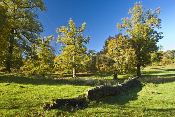 Anglais arbre stand seuls campagne ciel Photo stock © hanusst