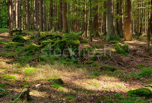 Forêt printemps paysage été parc fraîches Photo stock © hanusst