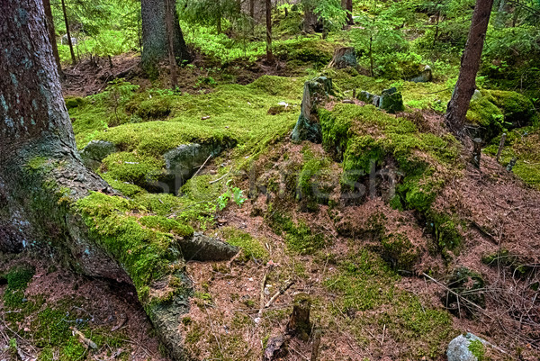 The primeval forest-HDR Stock photo © hanusst