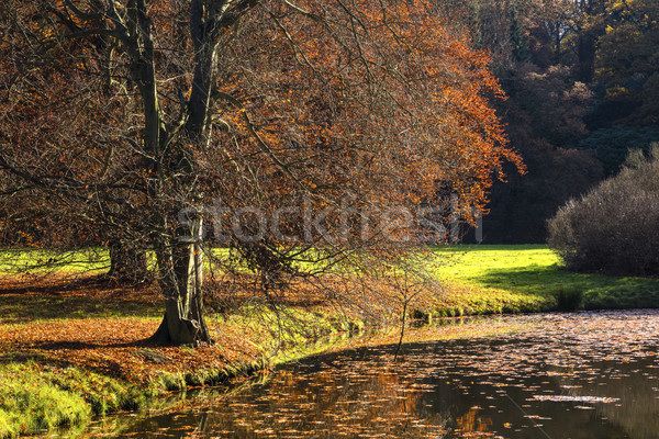 The leafy tree in the morning and the Pond Stock photo © hanusst