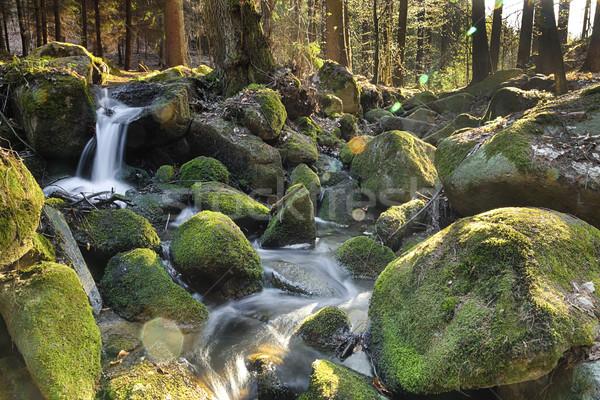 Rivier bos hdr water boom voorjaar Stockfoto © hanusst
