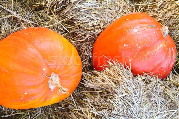 Twee groot oranje pompoenen boerderij grond Stockfoto © happydancing