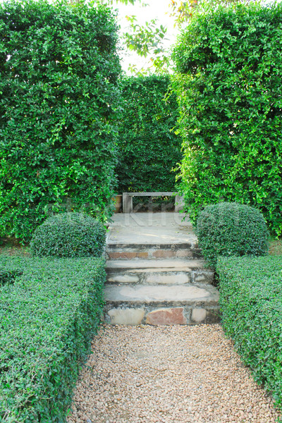Steps pathway with green hedge  Stock photo © happydancing