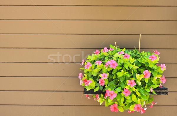 Opknoping bloem hout muur huis tuin Stockfoto © happydancing