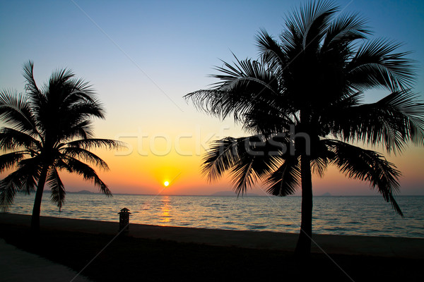 Coconut palm trees silhouetted against sky and sea at sunrise 