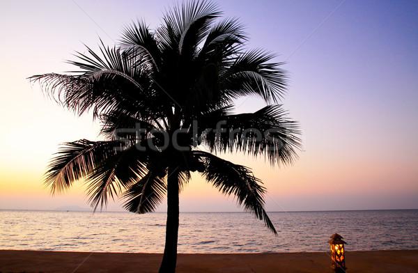 Kókuszpálma fa égbolt tenger napfelkelte naplemente Stock fotó © happydancing