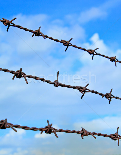 barbed wires against blue sky Stock photo © happydancing
