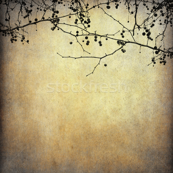 Grunge papier gedroogd boom vorm boek Stockfoto © happydancing