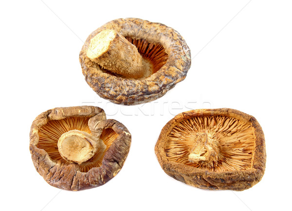 Dry Shiitake Mushroom isolated on white  Stock photo © happydancing