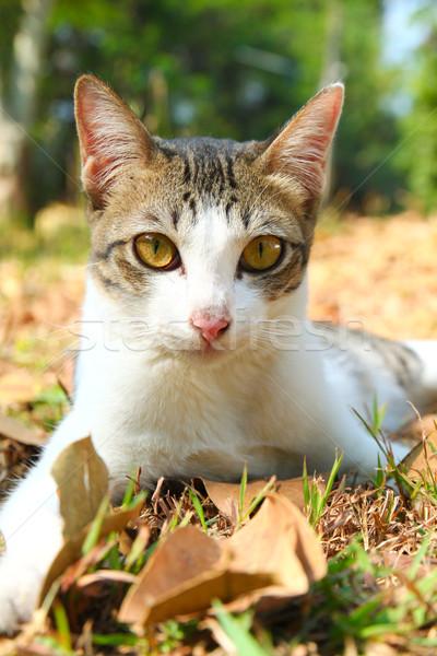 Photo stock: Cute · chat · herbe · jardin · printemps · bois