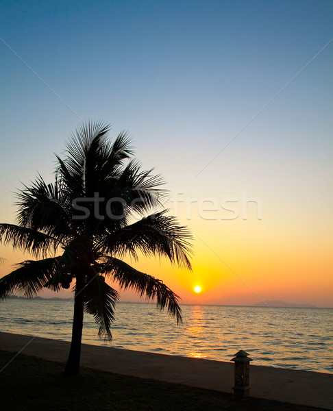 Coconut palm tree silhouetted against sky and sea at sunrise 