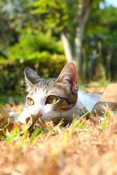 Eenzaam kat gras tuin voorjaar hout Stockfoto © happydancing