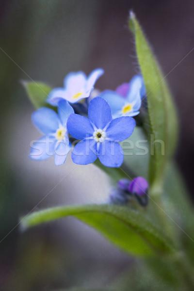 Сток-фото: мне · не · цветок · сердце · фон