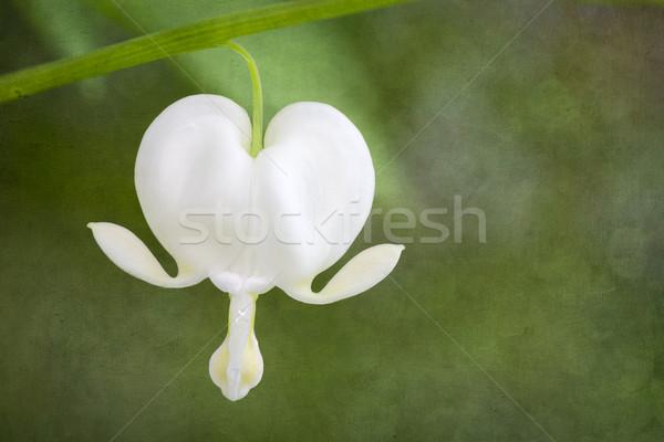 Kanama kalp çiçek grunge bahar sevmek Stok fotoğraf © haraldmuc