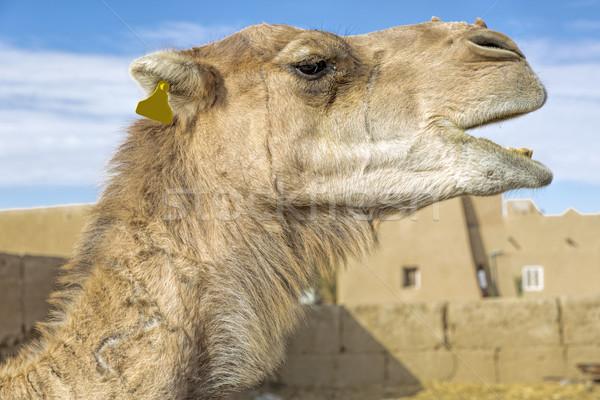 Portré Marokkó észak Afrika égbolt nyár Stock fotó © haraldmuc