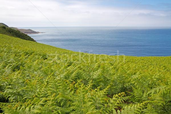 Fern (Dryopteris filix-mas) on the north coast of Jersey, UK Stock photo © haraldmuc