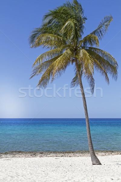Cocotier arbre plage soleil été Palm Photo stock © haraldmuc