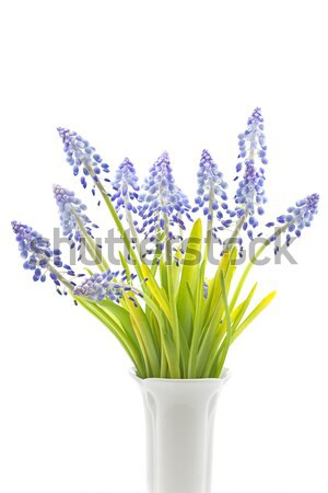 Fleurs texture fond domaine bleu Photo stock © haraldmuc