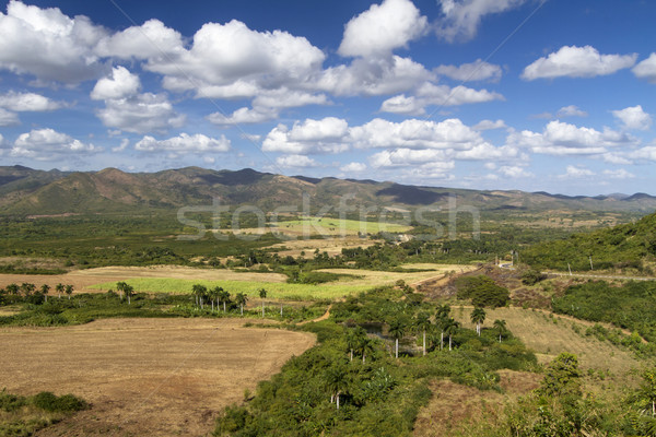 Typical farmland on the island of Cuba Stock photo © haraldmuc