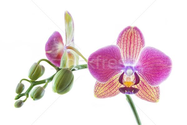Orquídea branco flor amor folha jardim Foto stock © haraldmuc