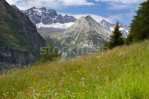 Alpino prado belo flores montanhas céu Foto stock © haraldmuc