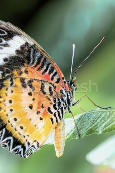 Foto stock: Tropical · borboleta · natureza · verde · cor · branco