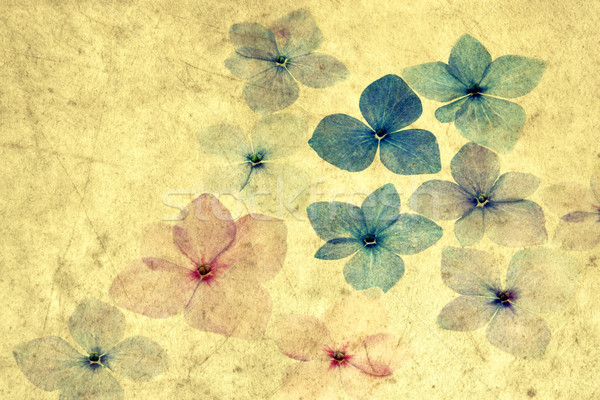 Hydrangea petals with texture overlay Stock photo © haraldmuc