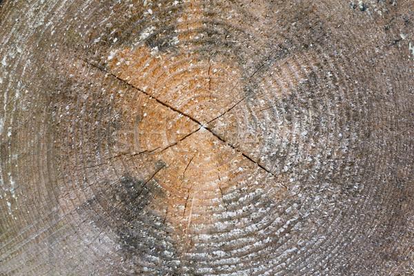 поперечное сечение ежегодный кольцами природы крест Сток-фото © haraldmuc