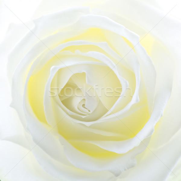 Kremowy biały placu format wiosną Zdjęcia stock © haraldmuc