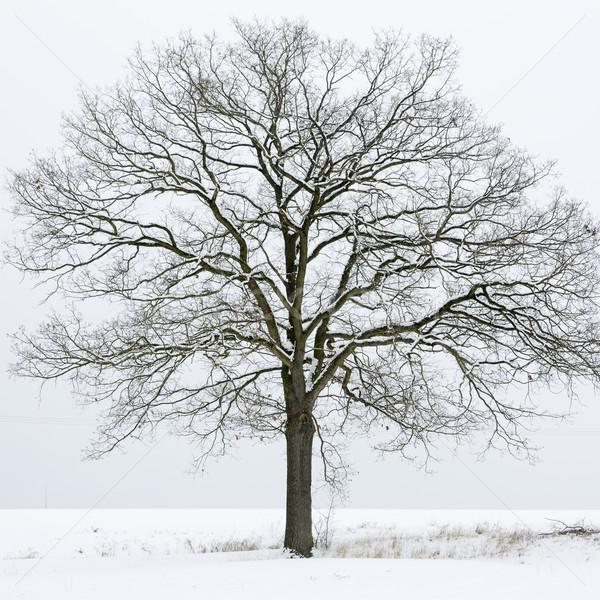 Fa hó fedett mező háttér tél Stock fotó © haraldmuc