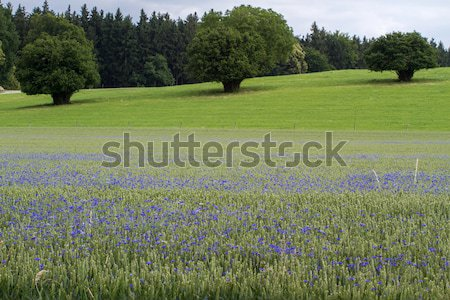 Stockfoto: Voorjaar · voedsel · gras · natuur