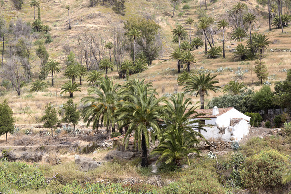 Small settlement on Gomera island, Spain Stock photo © haraldmuc