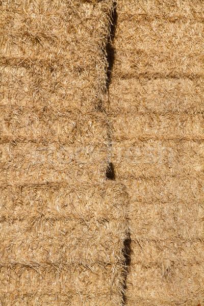 Altın saman kuru ot yığını çim yaz alan Stok fotoğraf © haraldmuc