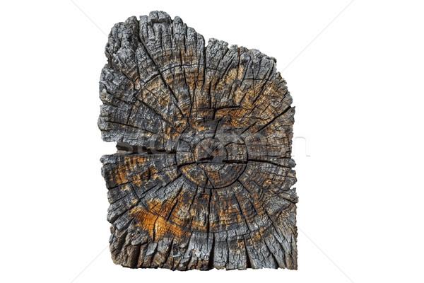 Keresztmetszet öreg fából készült bár fehér fa Stock fotó © haraldmuc