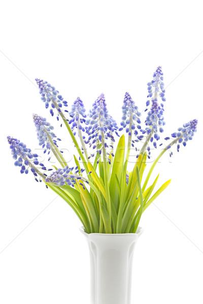 花 白 背景 フィールド 青 色 ストックフォト © haraldmuc