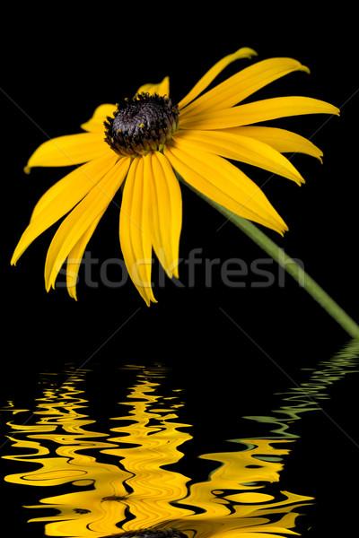 Geel bloem water effect zwarte tuin Stockfoto © haraldmuc