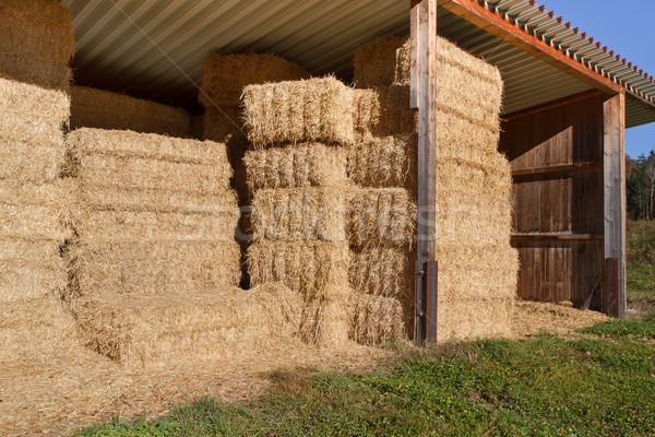 Feno outono grama campo fazenda Foto stock © haraldmuc