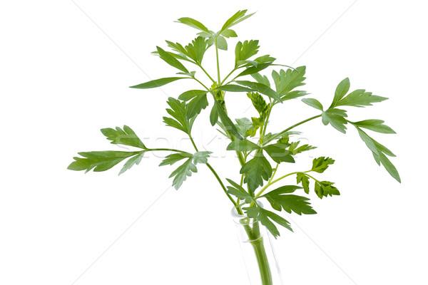 Fresh parsley isolated on white background Stock photo © haraldmuc