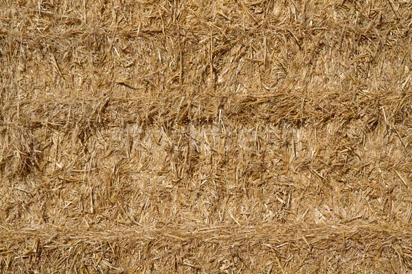 Gouden stro hooiberg gras zomer veld Stockfoto © haraldmuc