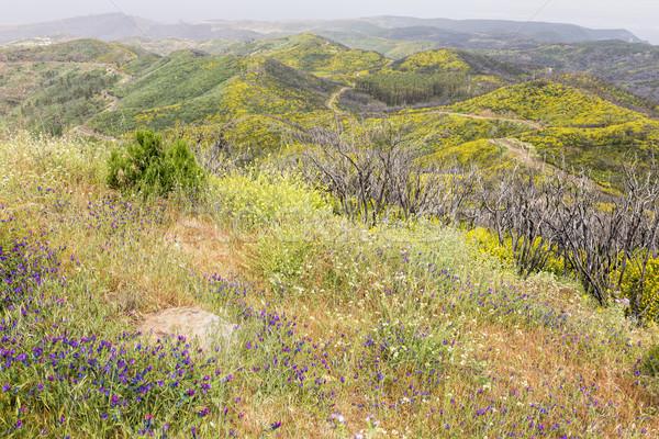 Tájkép sziget Spanyolország virágok természet Európa Stock fotó © haraldmuc
