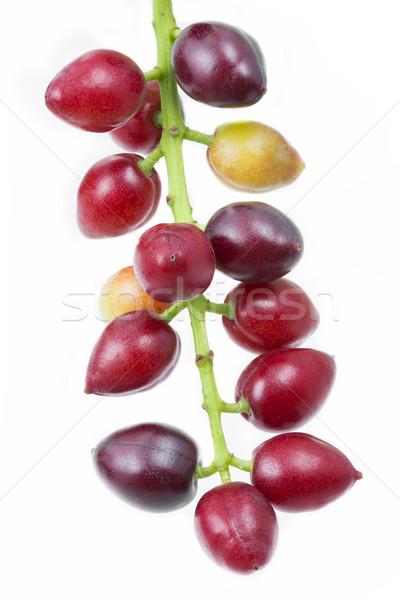 Cereza laurel frutas frutas fondo verano Foto stock © haraldmuc