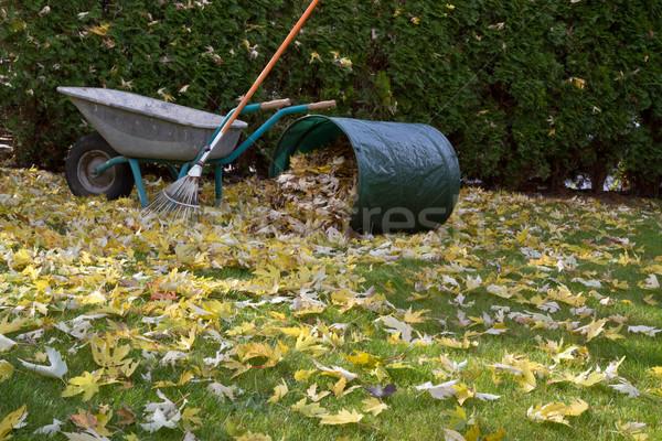Otono follaje árbol naranja verde hojas Foto stock © haraldmuc