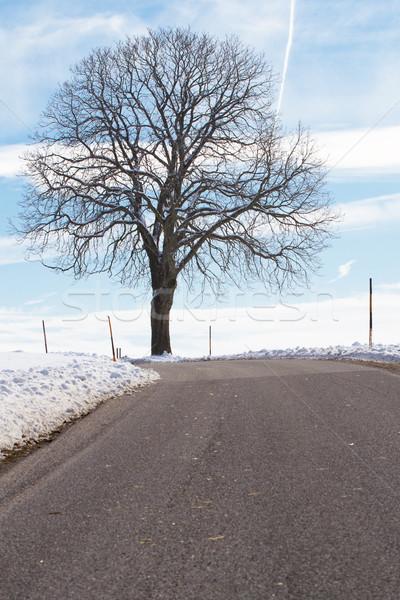 Vidéki út tél fa természet tájkép hó Stock fotó © haraldmuc