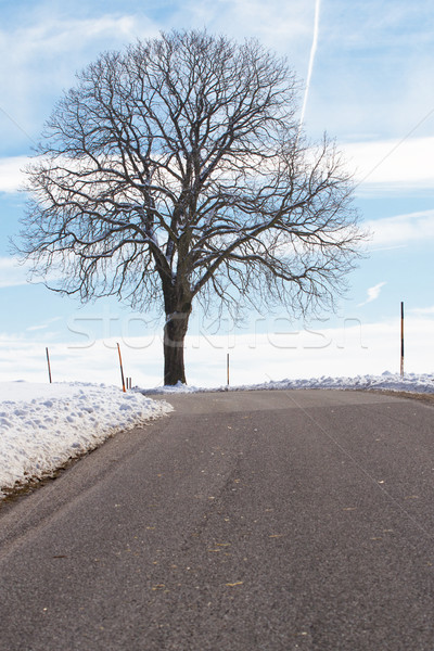 Hiver arbre nature paysage neige Photo stock © haraldmuc