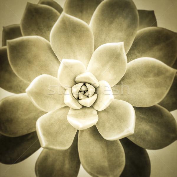 Сток-фото: завода · текстуры · лист · саду · фон · красоту