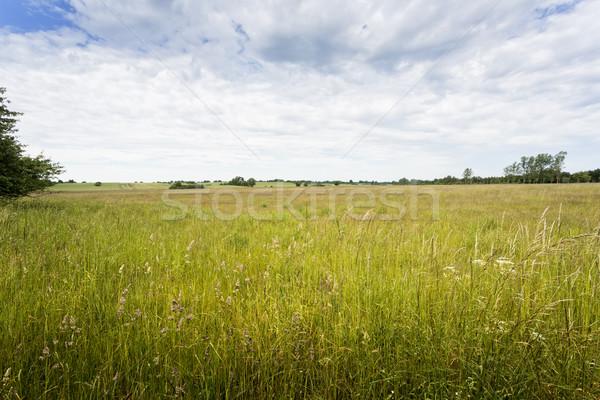 Vidéki táj Németország fa tájkép nyár park Stock fotó © haraldmuc