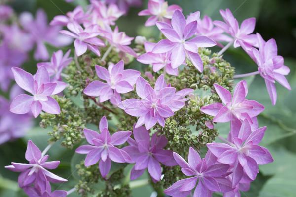 Virág engem románc szépség zöld Stock fotó © haraldmuc
