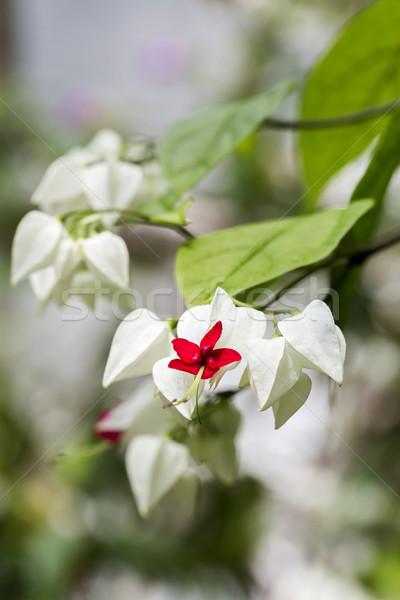 çiçekler çiçek doğa yaz yeşil Stok fotoğraf © haraldmuc