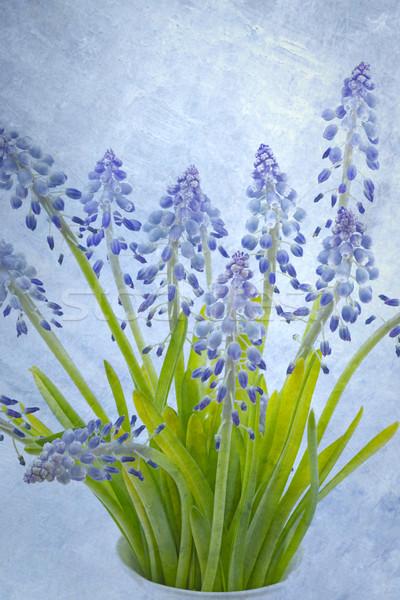 Bloemen textuur achtergrond veld Blauw Stockfoto © haraldmuc